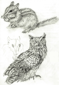 Owl-&-Chipmonk