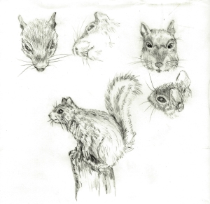 Squirrel-Sketches